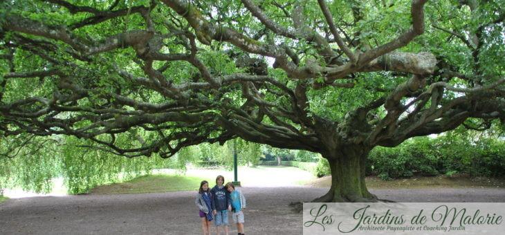  Vacances en Normandie : arbre remarquable