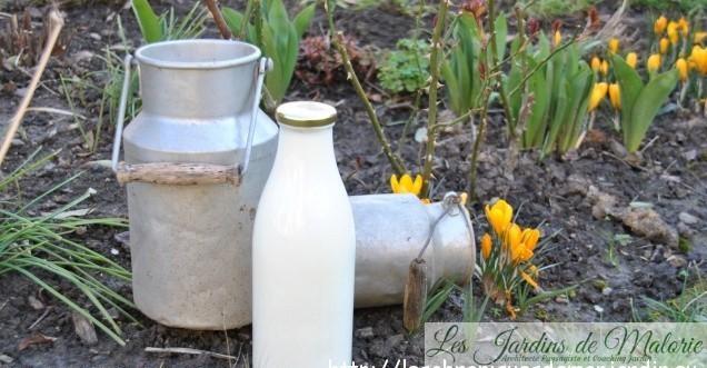 Traiter les rosiers au lait écrémé? Avez-vous testé?