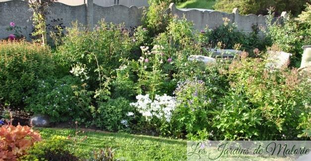 Chroniques de mon jardin : Floraisons de mai…