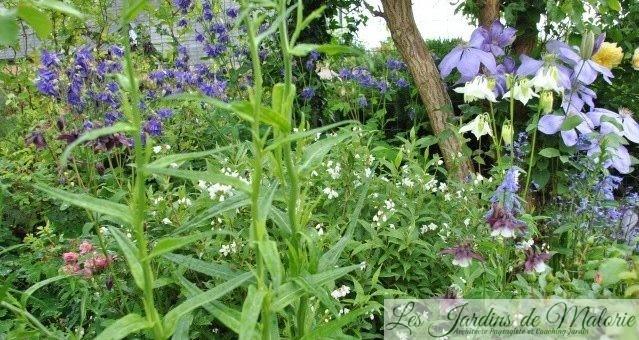 Chroniques de mon jardin : Fleurs de mai