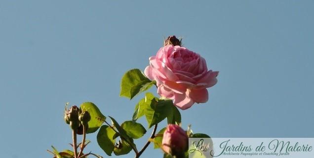Chroniques de mon jardin : Quel beau dimanche!