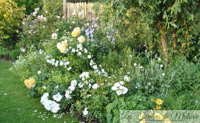 Chroniques de mon jardin : le massif jaune - Les Jardins de Malorie