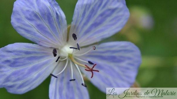 Chroniques de mon jardin : Macro de fin juin