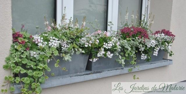 Fenêtre fleurie, jardinière d'été
