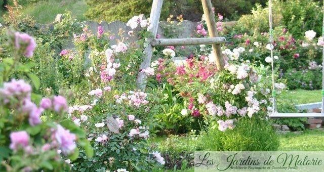 Chroniques de mon jardin : Roses de juillet