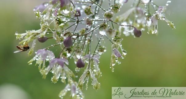 Macro :Gouttes de pluie
