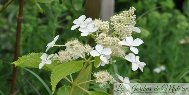 Des fleurs de juillet