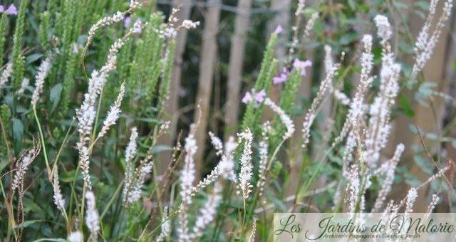 Chroniques de mon jardin : fleurs blanches d'octobre