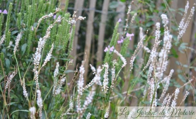 Chroniques de mon jardin : fleurs blanches d\'octobre - Les ...