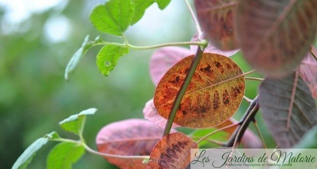 La feuille d'automne…