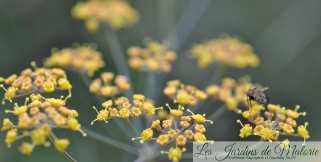Chroniques de mon jardin : Floraisons jaunes d'octobre