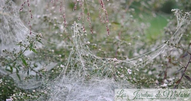 🕸 Toiles d'araignées
