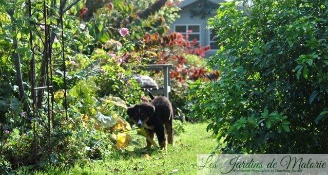 🐶 Les chroniques de mon chien: Nala joue