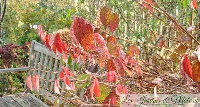 Feuillages d'automne : Orange Dream