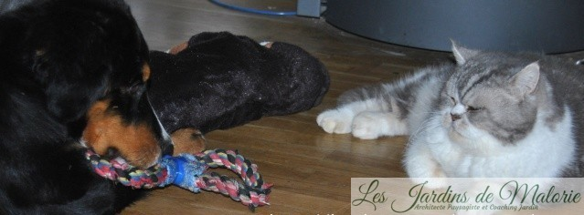 🐶 Les Chroniques de Nala : Entre chien et chat