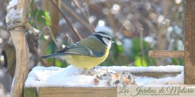 Les mangeoires aux oiseaux