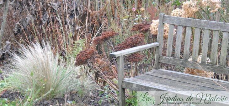 Chroniques de mon jardin : Le petit banc