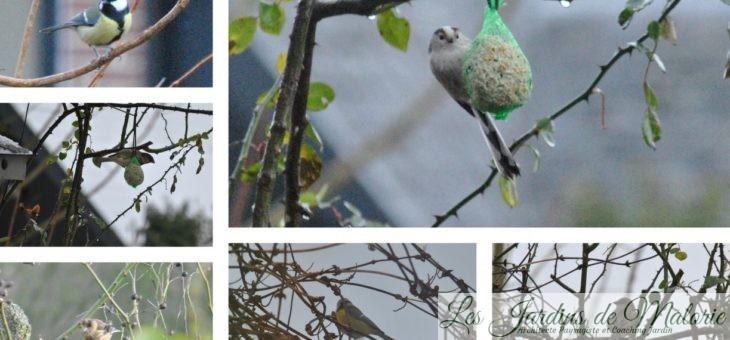 Recensement des oiseaux de jardin pour Natagora