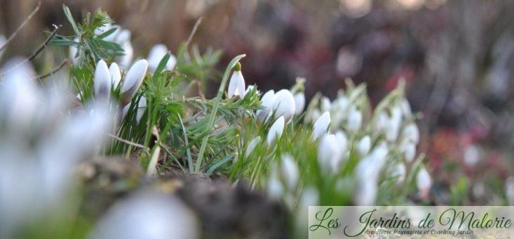 Joli Duo blanc: Galanthus & Crocus