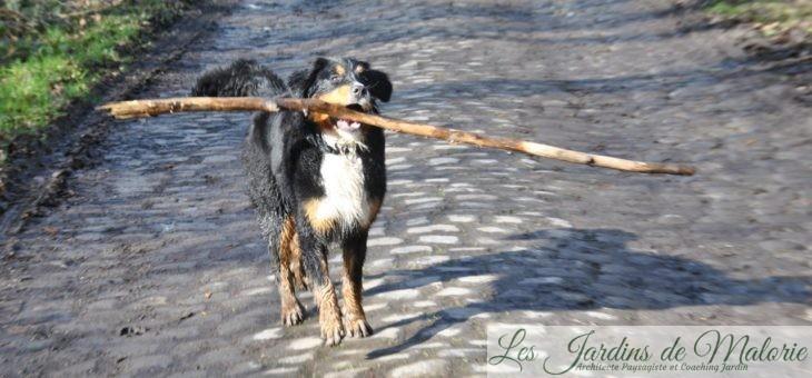 🐶 Chroniques de mon chien: Nala, l'ambitieuse!