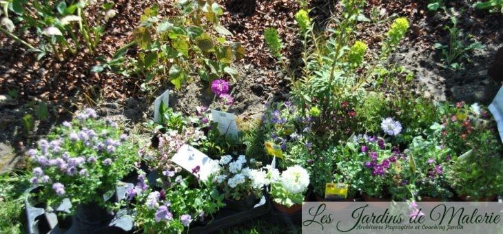 Nouvelles plantes au jardin