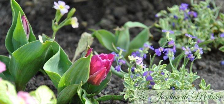 Chroniques de mon jardin: plantations dans le massif de la balançoire