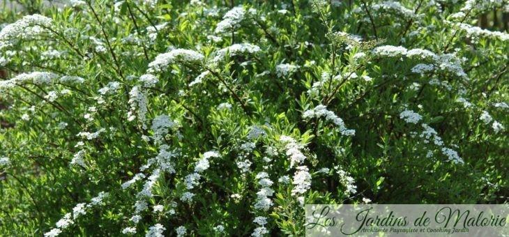 Chroniques de mon jardin : Floraisons d'avril…