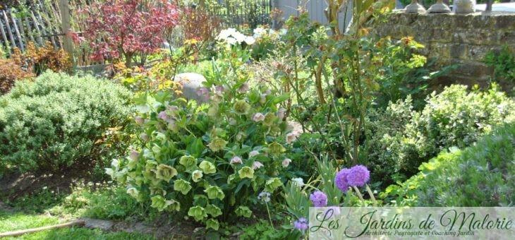 Chroniques de mon jardin: floraisons d'Avril 2015