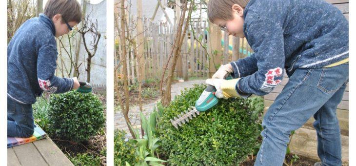 Les mois en A, on taille les buis… et autres arbustes persistants