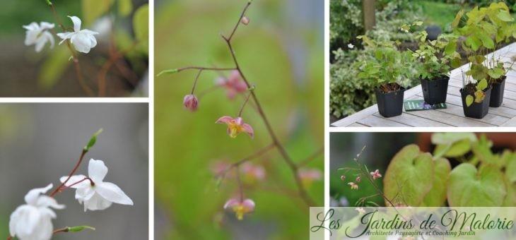 Fête des plantes à Beervelde: mes achats