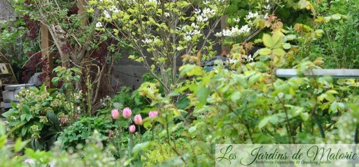 Chroniques de mon jardin : Joli mois de Mai…