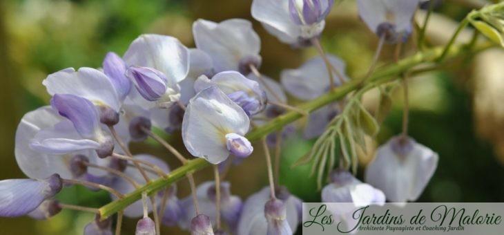 Chroniques de mon jardin: Epatant mois de mai!