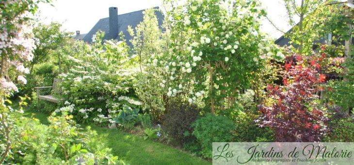 Chroniques de mon jardin : Viornes & cie