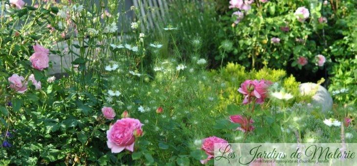 Chroniques de mon jardin: floraisons de juin