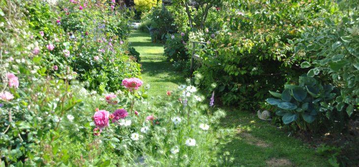 Chroniques de mon jardin: l'allée des roses