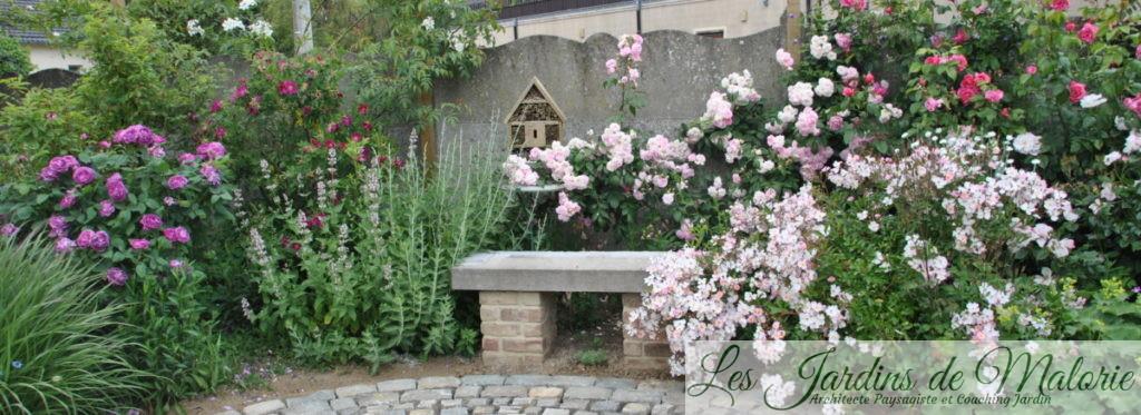 rosiers 'Reine des violettes', 'Ann Endt', nepeta, rosier 'Belle de Sardaigne et 'Tapis volant' et 'Théo'