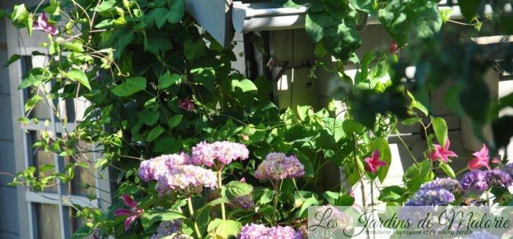 Chroniques de mon jardin: Floraisons de début juillet