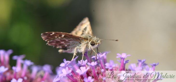 Recensement des papillons de jardins avec Natagora