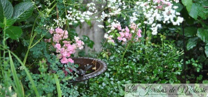 Chroniques de mon jardin: Beautés de fin août