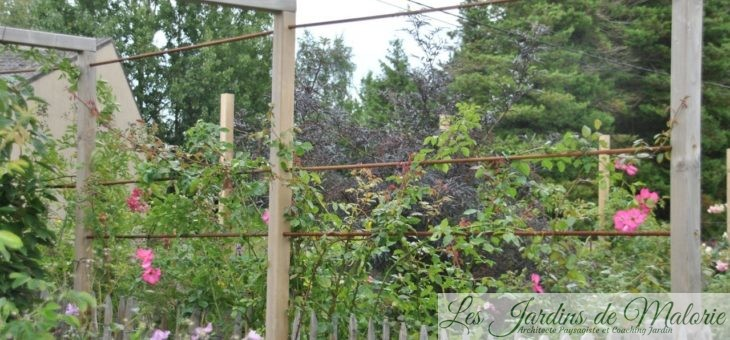 Construction des structures pour les rosiers grimpants