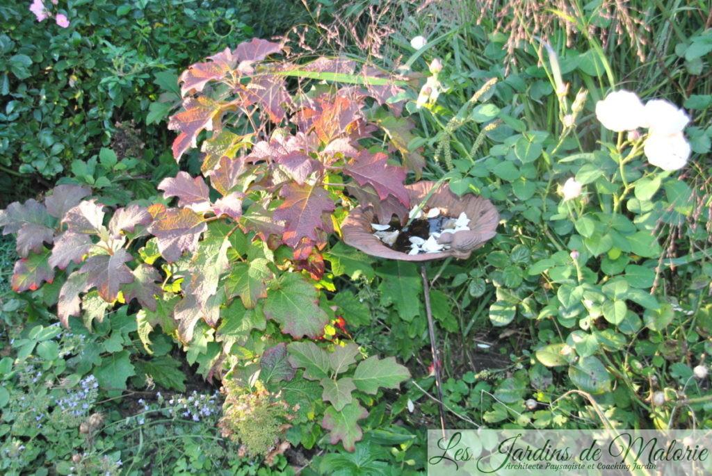 hydrangea quercifolia et rosier 'William et Catherine'