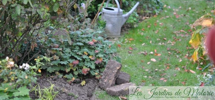 Chroniques de mon jardin: Plantations et chaise musicale