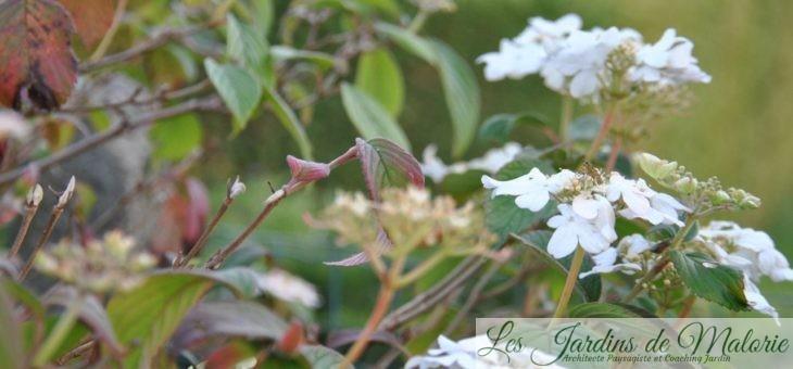Chroniques de mon jardin: Fleurs blanches de Novembre