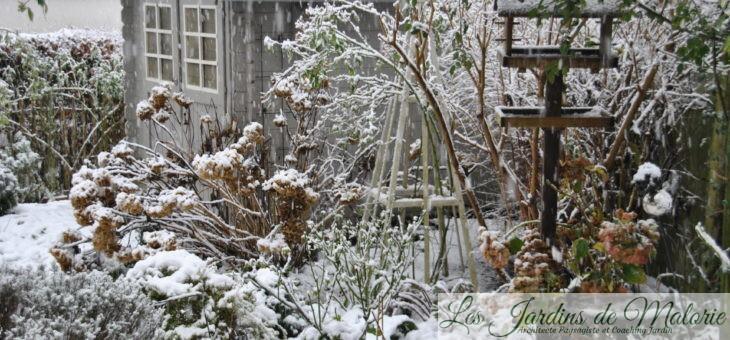 🐦 Neige encore… Les oiseaux au jardin