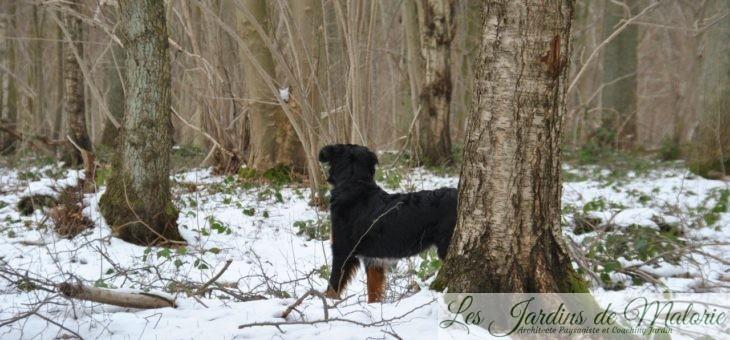 Les chroniques de Nala: dans la neige