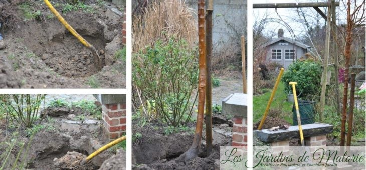 🌳 J'ai planté un arbre dans mon petit jardin!