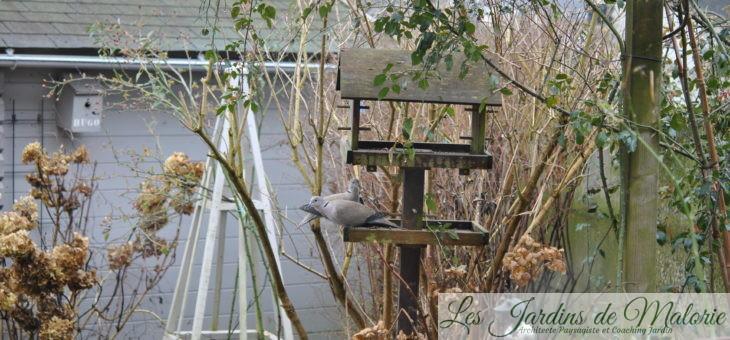 🐦 Oiseaux du jardin: Les tourterelles turques