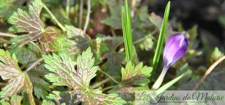 Chroniques de mon jardin : Ce matin de février
