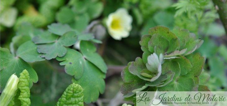 Chroniques de mon jardin: Beautés d'avril…