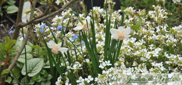 Des vivaces couvre-sol pour le printemps